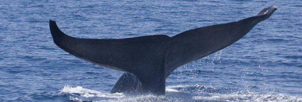 Wale Sri Lanka
